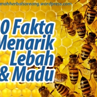 20 Fakta Menarik Seputar Lebah dan Madu