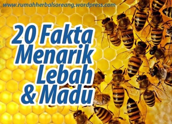 20 Fakta Menarik lebah dan madu